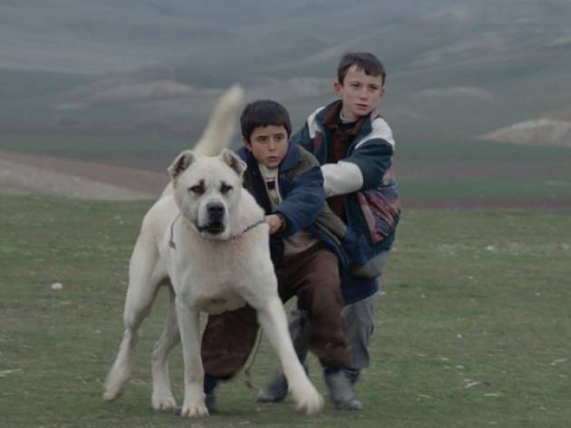 Sivas, película de Kaan Müjdeci