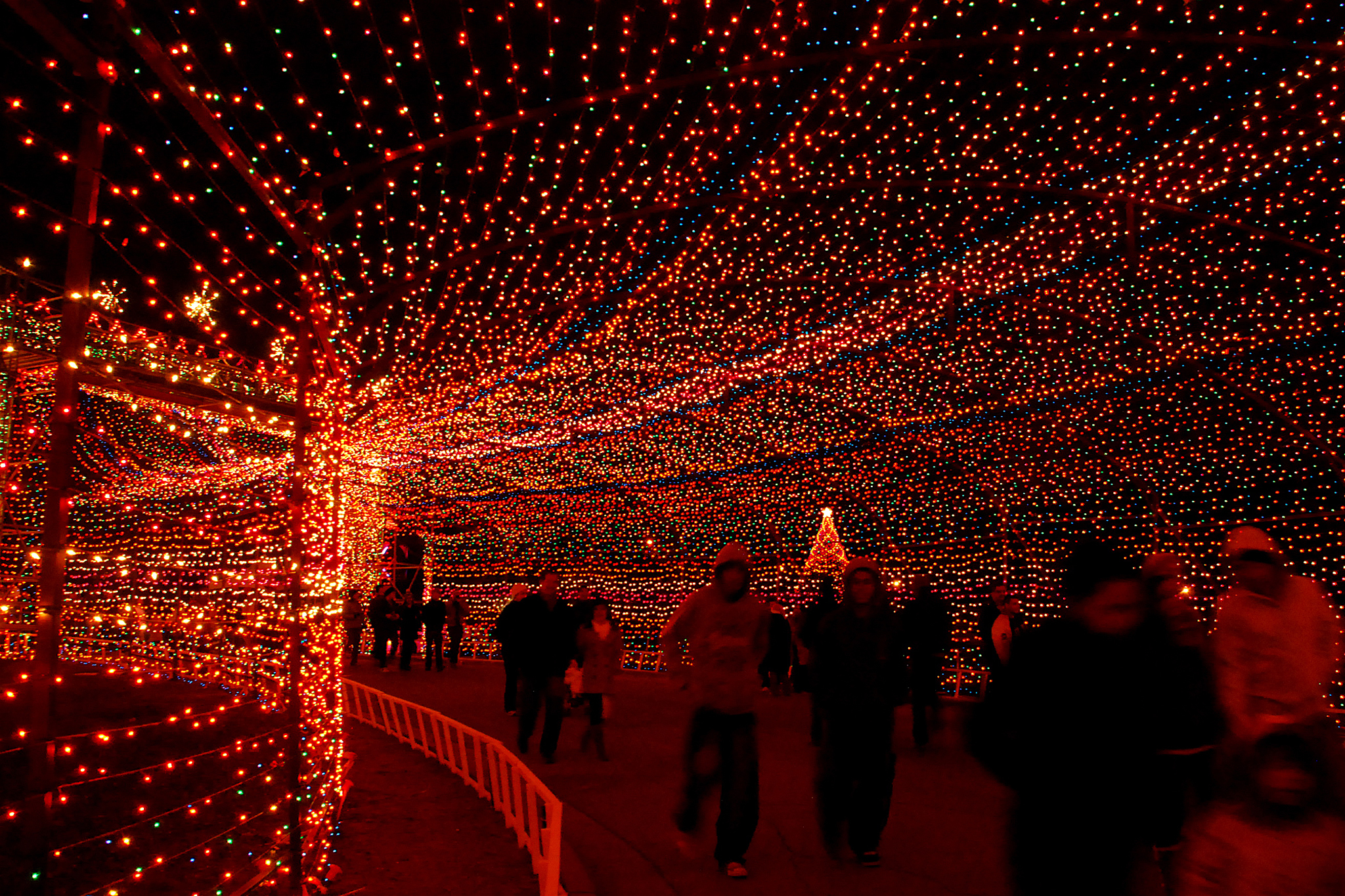 Trail of Lights