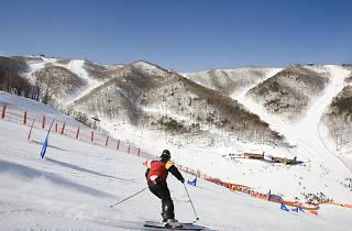 하이원리조트 스키장