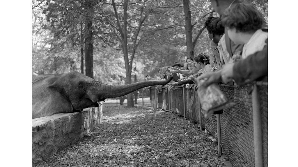 NY ELEPHANT