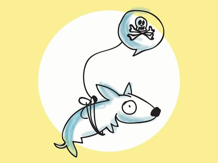 Alto al envenenamiento de perros