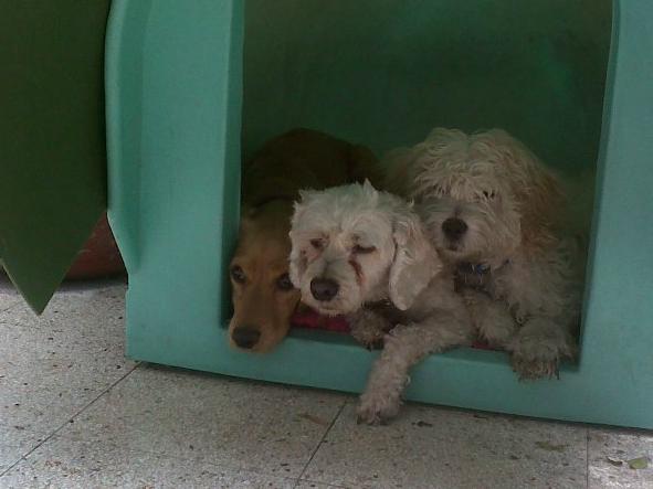 Mascotas en sus casas