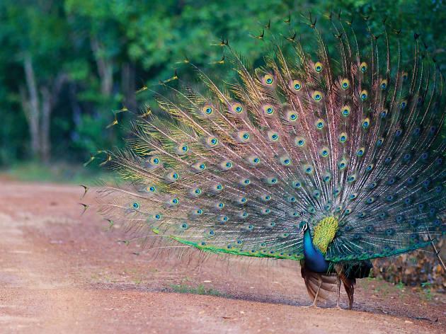 Bundula: indulge in bird watching