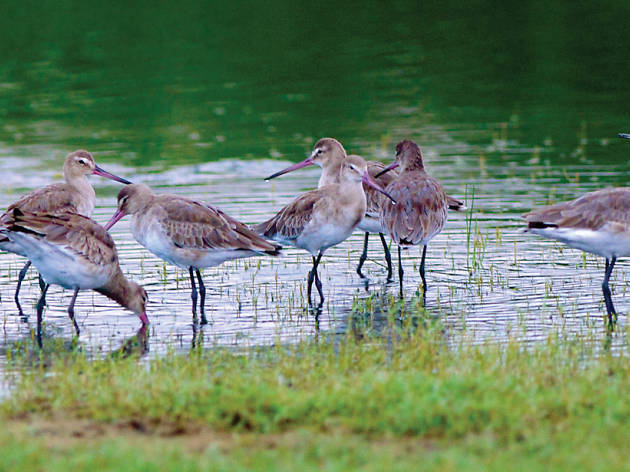 Indulge in bird watching; Visit Bundala