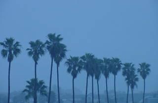 Rain Los Angeles