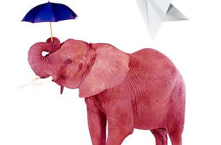 30 elephants under an umbrella
