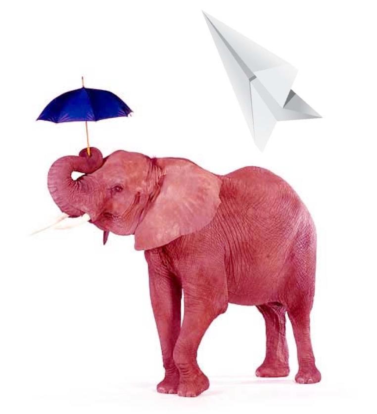 30 elephants under an umbrella