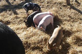 Animal Land Children's Farm