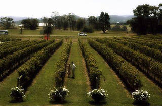 Rochford Winery