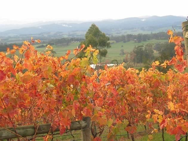 Brandy Creek Wines & View Café