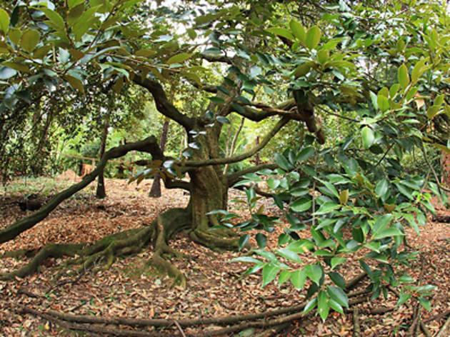 Glen Harrow Gardens