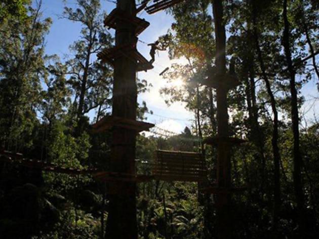 Trees Adventure Park