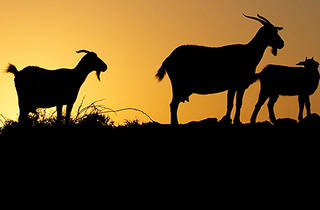 Tallarook Goat Farm