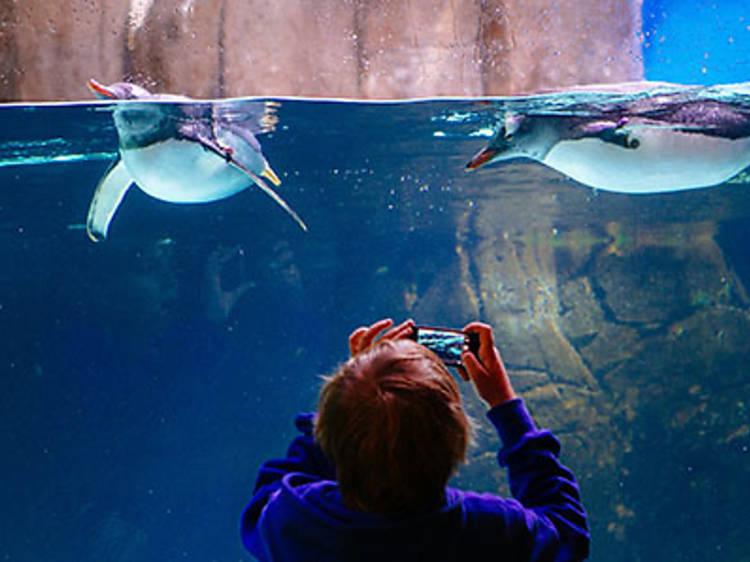 Get fishy at the Melbourne Aquarium