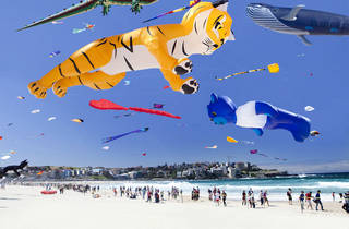 A shot of festival of winds at Bondi Beach