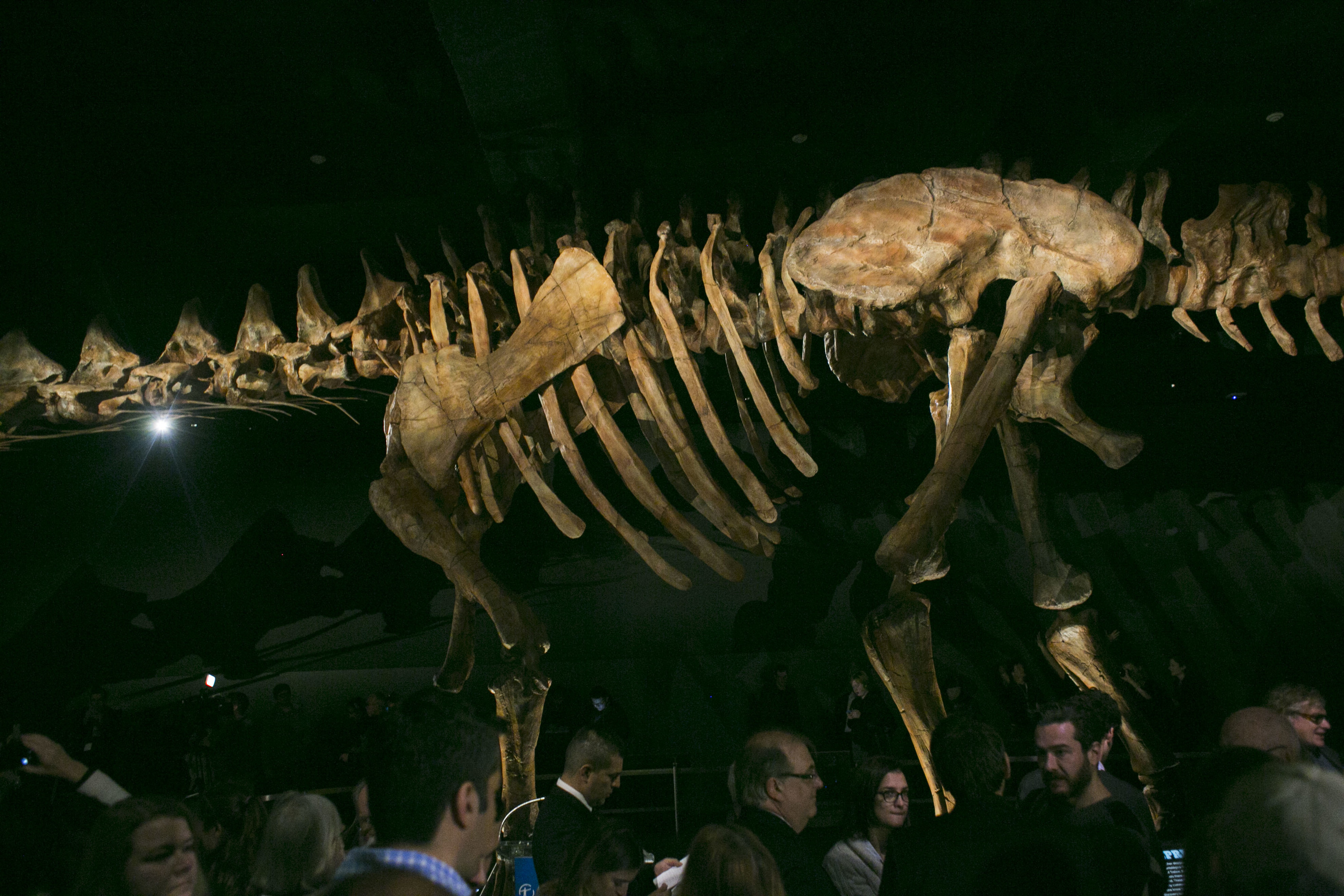 See photos of the new Titanosaur
