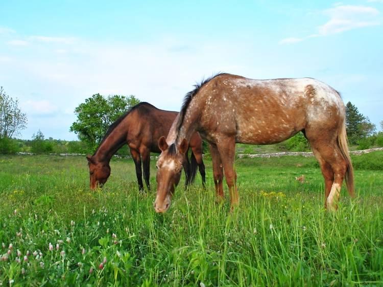 Go horse-riding in Istria