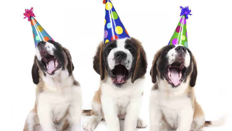 Las mejores recomendaciones para celebrar el cumple de tu mascota