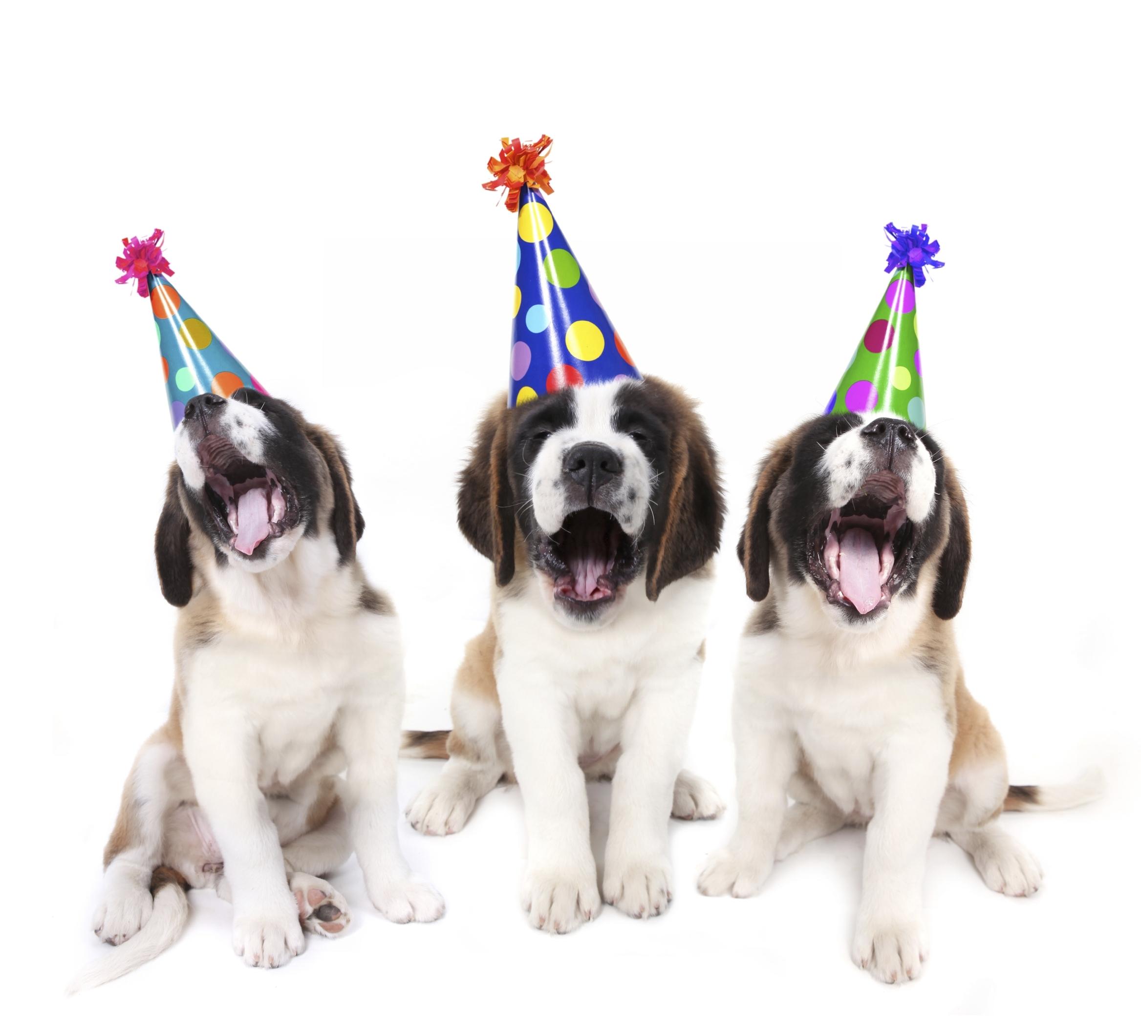Celebra el cumpleaños de tu mascota