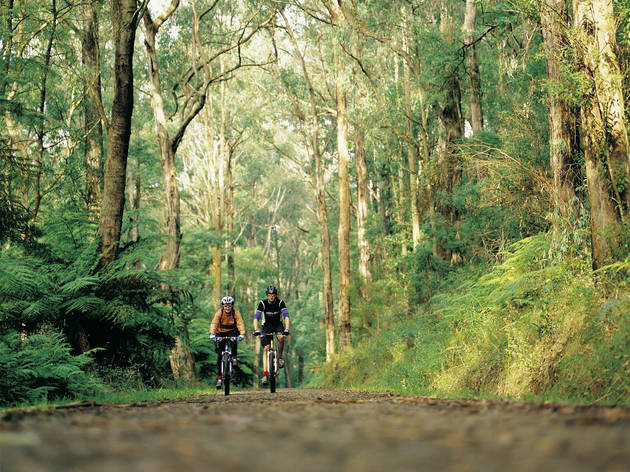 Two cyclists ride through the picturesque Dandenong Ranges