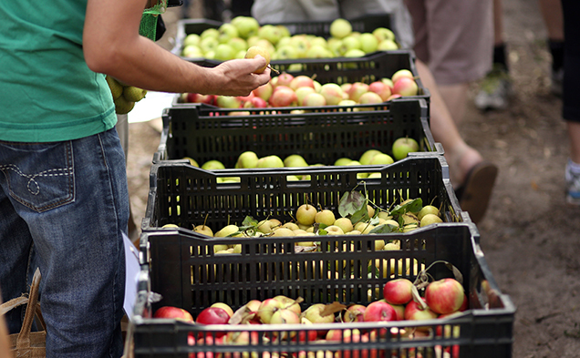 Carlton Farmers' Market