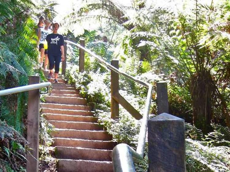 The 1000 Steps Kokoda Track Memorial Walk