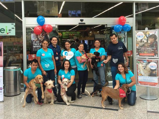 Gran evento de adopciones en Petco