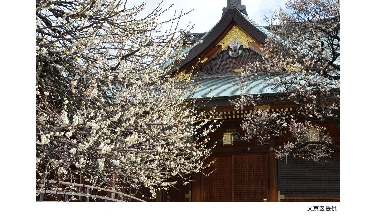 Bunkyo Ume Matsuri