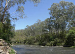 Pound Bend: Warrandyte National Park