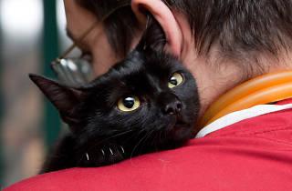 Campaña de esterilización para perros y gatos