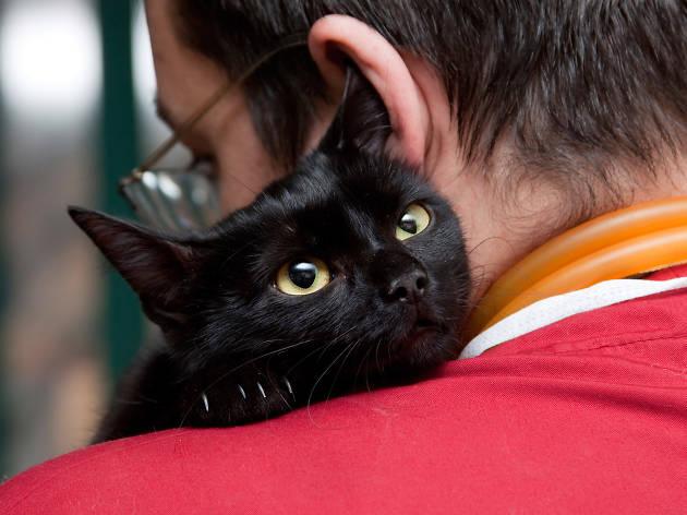 Campaña de esterilización de perros y gatos
