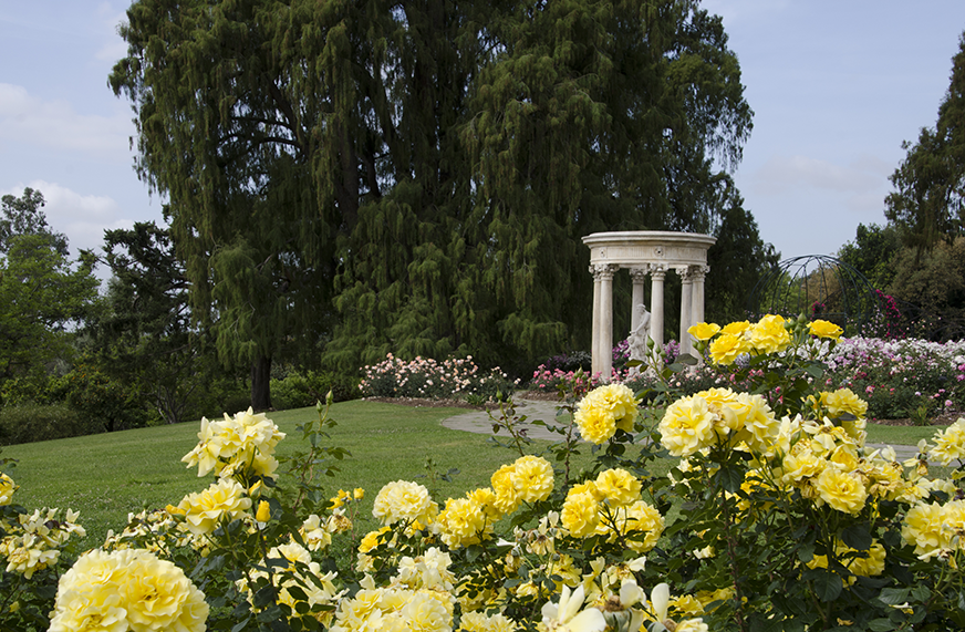 Huntington Library's Rose Garden