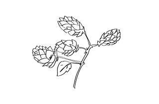 Hops illustration