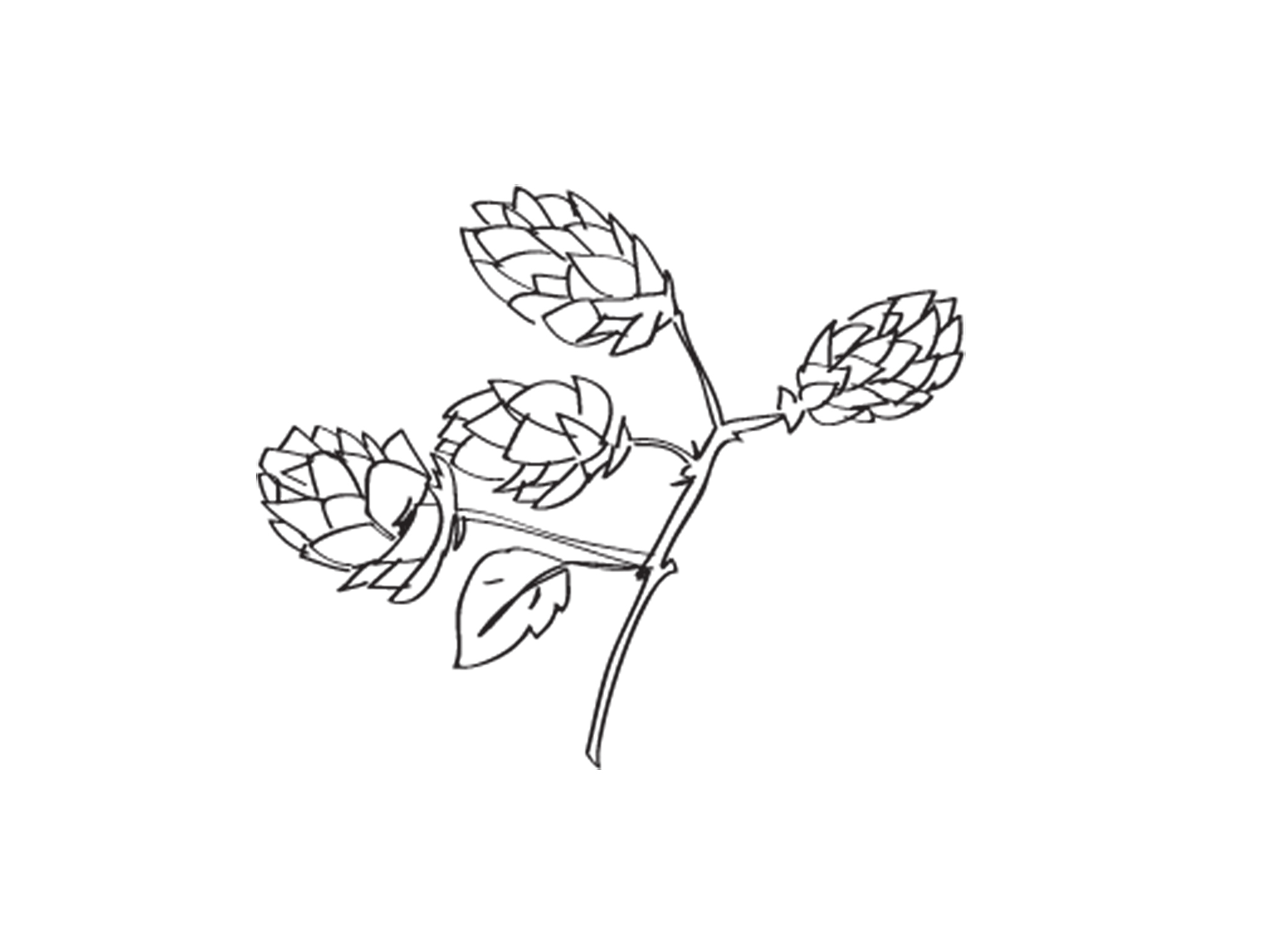 Hops illustration