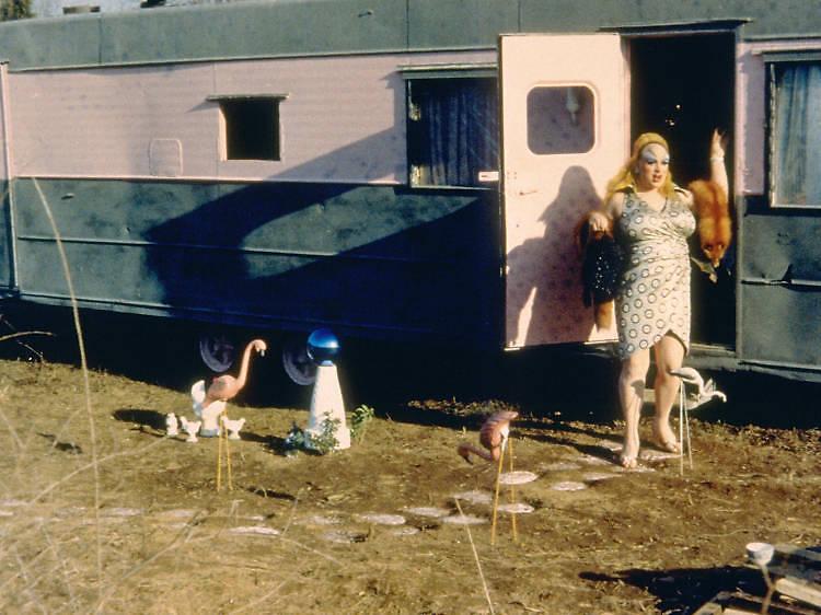 ピンク・フラミンゴ(1972)