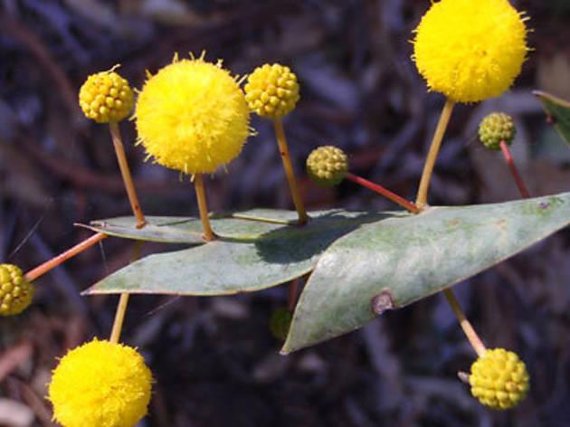 The Australian Botanic Garden, Mount Annan