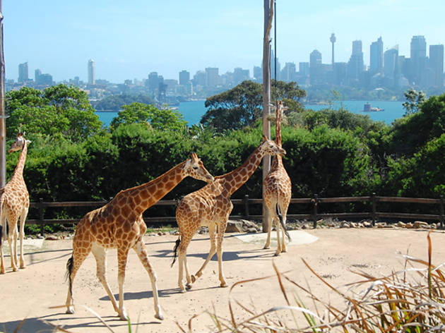 Meet cute animals at Taronga Zoo