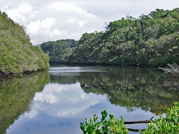 Friends of Lane Cove National Park