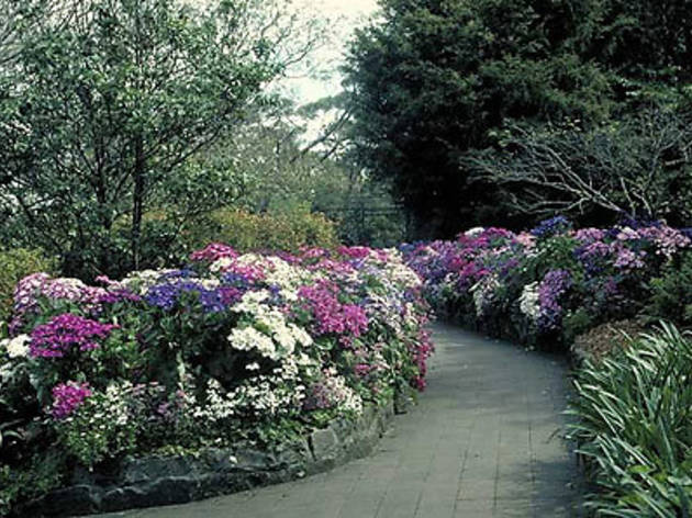 EG Waterhouse National Camelia Gardens