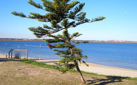 Lady Robinson Beach
