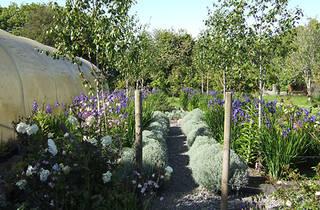Glebe Community Garden