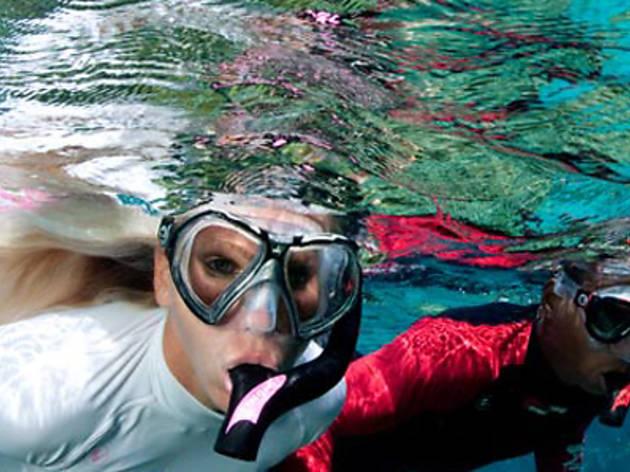 Snorkel Safari