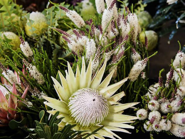 Seed Flora