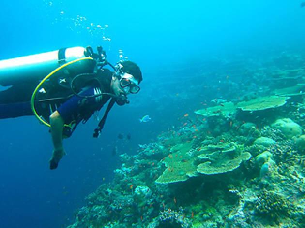 Pro Dive Sydney