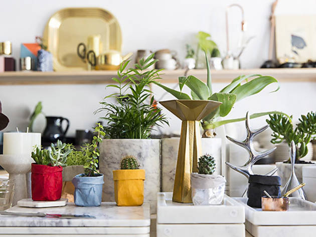 dea-store--pot-plants.jpg