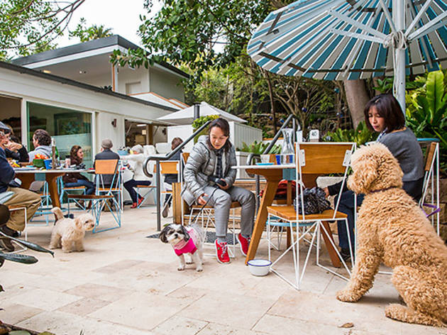 Dog-friendly pubs in Sydney