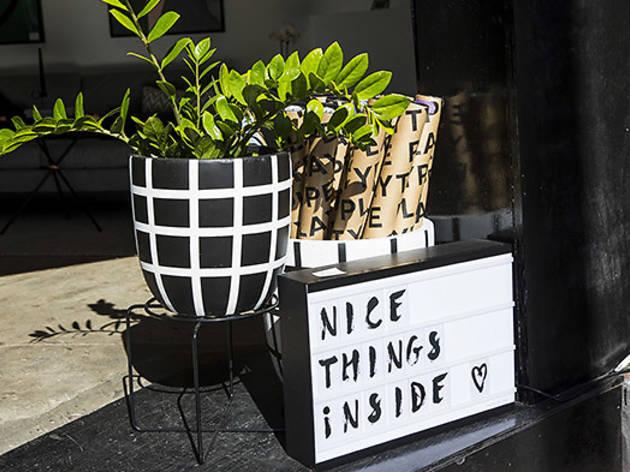 the-minimalist--lightbox-plant.jpg