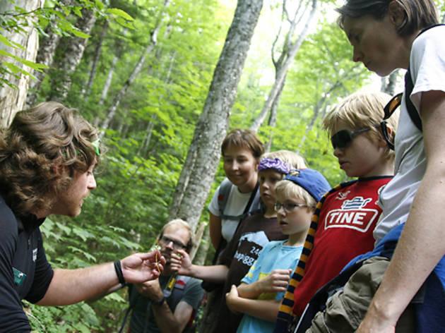 Appalachian Mountain Club Family Adventure Camps