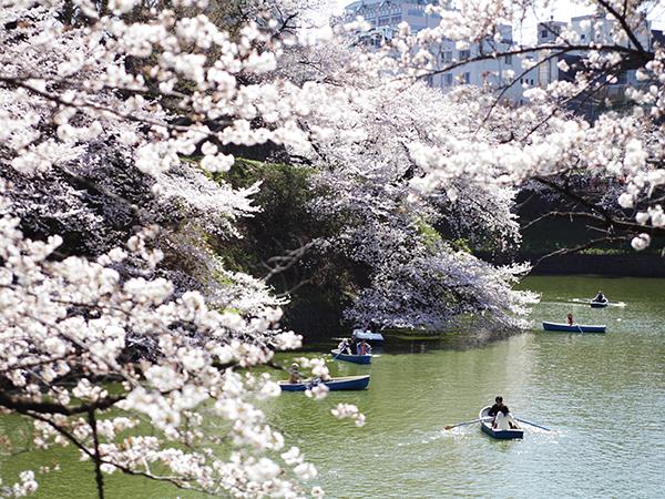 東京を創訳する 第4回『桜』