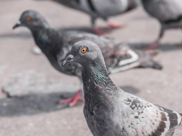 la señora de las palomas